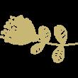 fiorellino-fridas