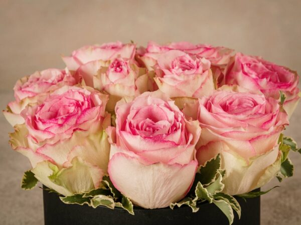 Medium Pink Rose Hatbox, fresh high quality home delivery roses