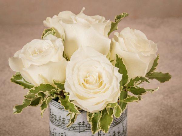 White Rose Sushi Frida's bestseller creation High quality white roses