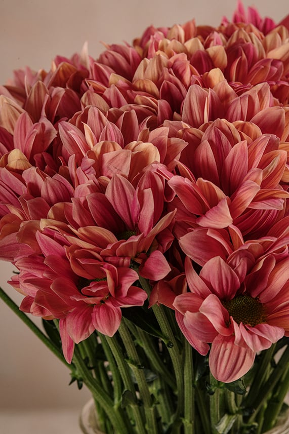 Bouquet di Margherite fiori freschi di altissima qualità, consegna a domicilio