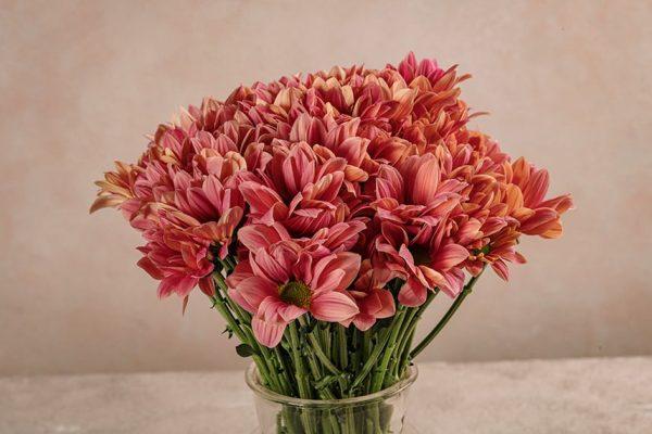 Bouquet di Margherite in stile Frida's, scegli il colore e la quantità di margherite che preferisci e noi prepareremo il tuo bouquet