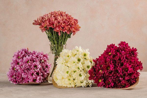 Bouquet Margherite, scegli il colore del tuo bouquet: salmone, bianco/avorio, rosa/lilla