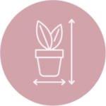 Dimensione piante da interno Frida's
